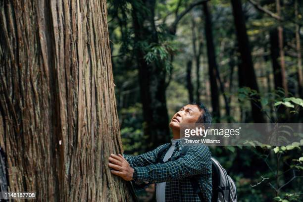 senior man reaching out and tocuhing a large tree in awe while hiking in a forest - disruptaging stock photos and pictures