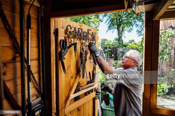 senior man selecting hand tool from door of gardening shed - wood material stock pictures, royalty-free photos & images