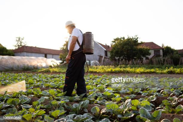 senior man spraying plants - spraying stock pictures, royalty-free photos & images
