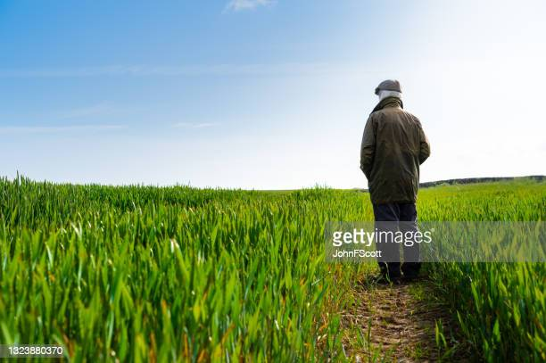 senior man standing amongst a cereal crop - johnfscott stock pictures, royalty-free photos & images