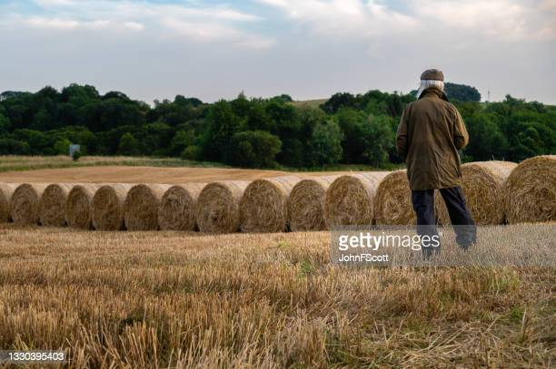 senior man standing in a field after harvest - johnfscott stock pictures, royalty-free photos & images