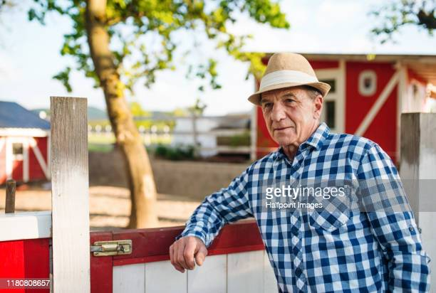 senior man standing outdoors on animal farm, looking at camera. - leaning stock pictures, royalty-free photos & images
