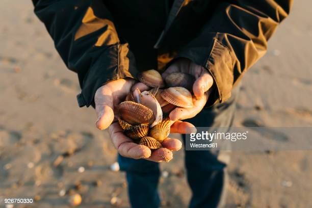 Senior man strolling at the beach, collecting shells