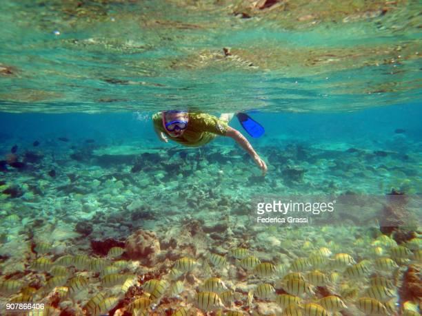 Senior Man Swimming Among Convict Surgeonfish (Acanthurus Triostegus)