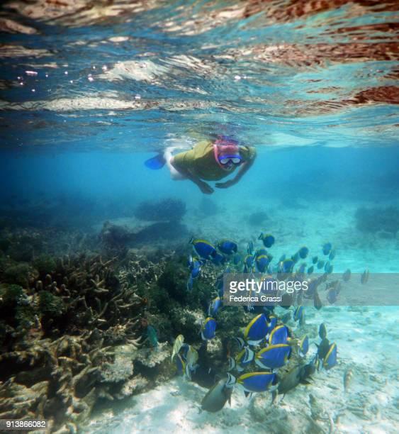 Senior Man Swimming Among Powderblue Surgeonfish or Blue Tang Fish (Acanthurus Leucosternon)