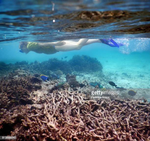 Senior Man Swimming On Bleached Coral Reef