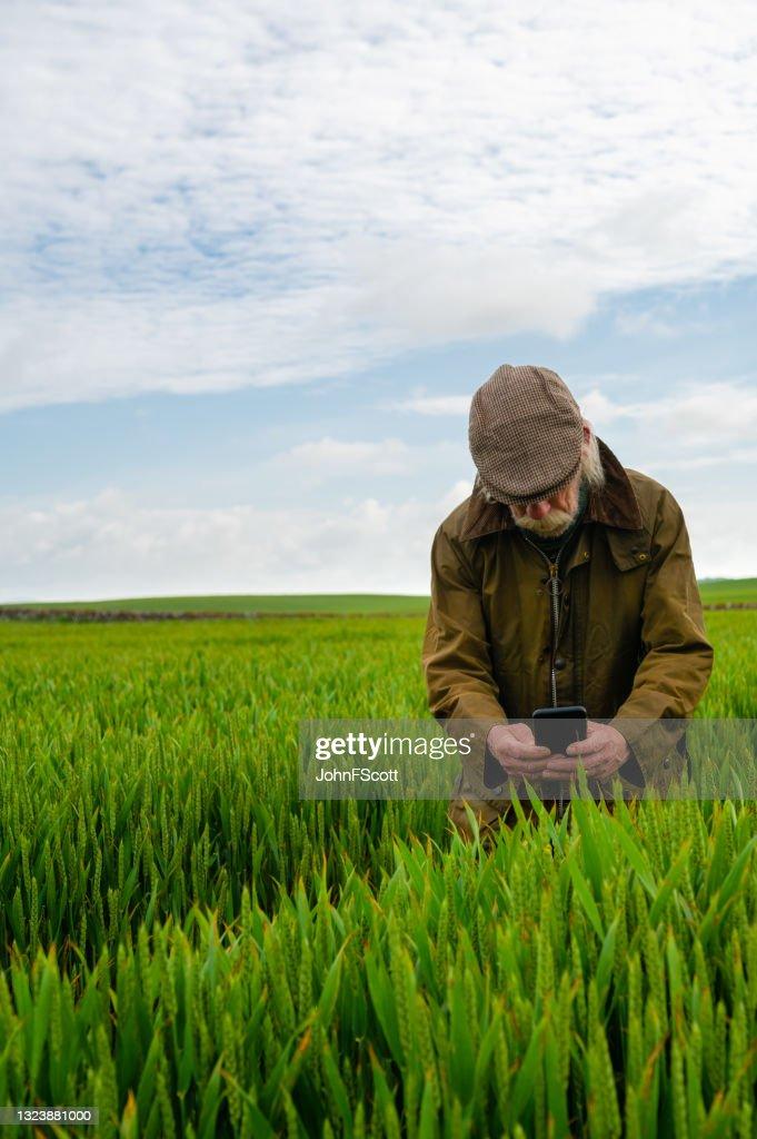 Senior man taking a photo in a crop field : Stock Photo
