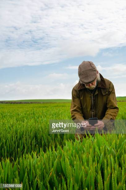 senior man taking a photo in a crop field - johnfscott stock pictures, royalty-free photos & images