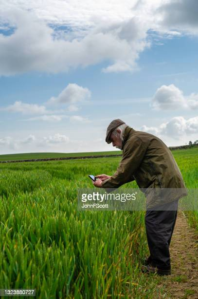 senior man taking a photo of a cereal crop - johnfscott stock pictures, royalty-free photos & images