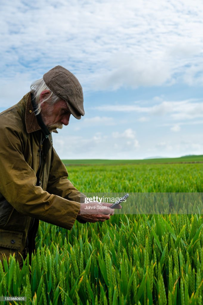 Senior man taking a photo with a mobile phone : Stock Photo