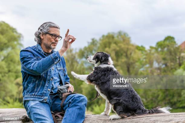 senior man teaching his dog - obedience training stock pictures, royalty-free photos & images