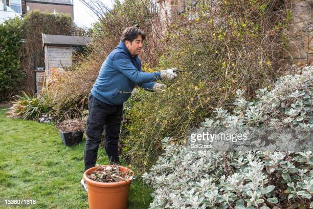 senior man tending to his home garden - one senior man only stock pictures, royalty-free photos & images