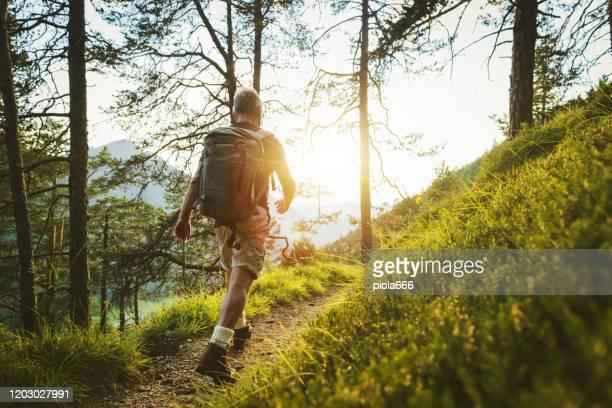 l'uomo anziano traccia escursioni in una foresta di montagna, nelle alpi d'italia - escursionismo foto e immagini stock