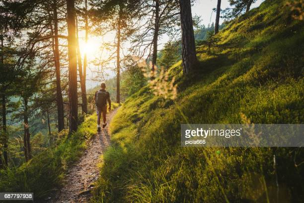 senior man trail hiking in a mountain forest - woodland stock pictures, royalty-free photos & images