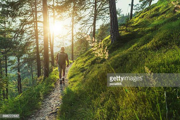 senior man trail hiking in the forest at sunset - wald stock-fotos und bilder
