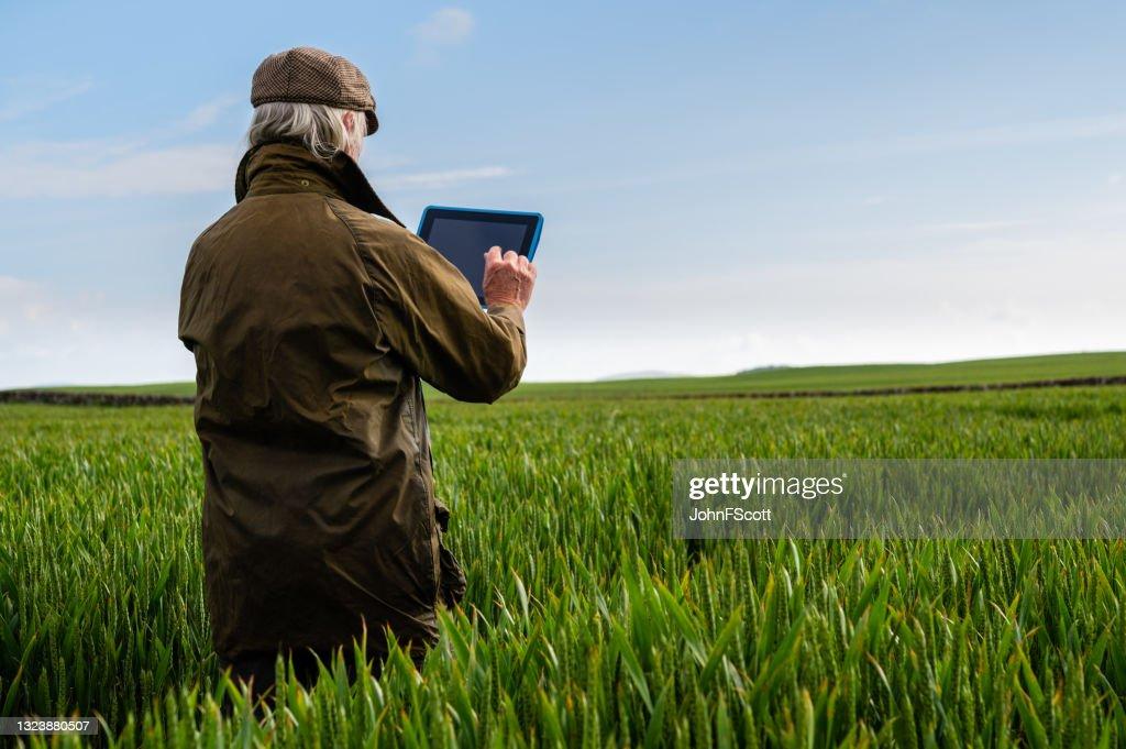 Senior man using a digital tablet in a field : Stock Photo