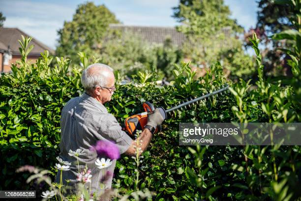 senior man using cordless trimmer to cut garden hedge - only men stock pictures, royalty-free photos & images