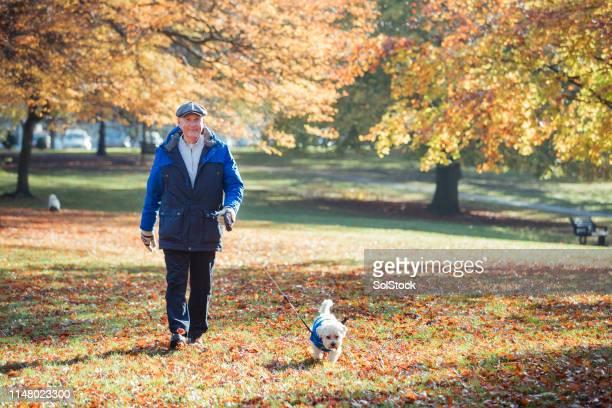 senior man walking his dog in autumn - walking stock pictures, royalty-free photos & images
