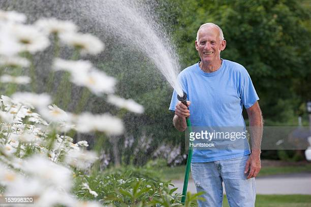 Senior man watering daisies in outdoor garden