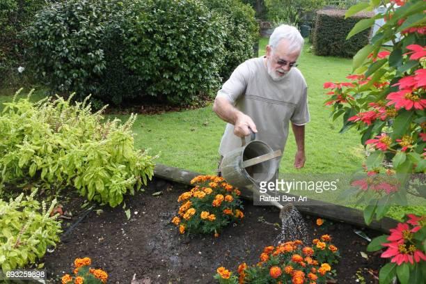 senior man watering plants in vegetable garden - rafael ben ari fotografías e imágenes de stock