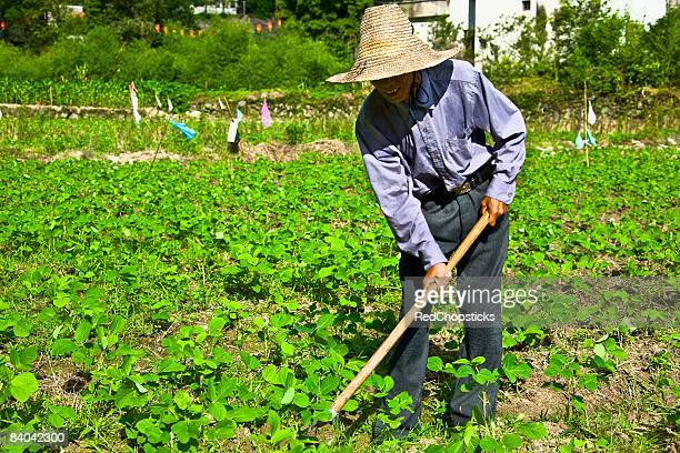 Senior man working in a field, Emerald Valley, Huangshan, Anhui Province, China
