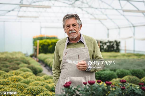 senior man working in a greenhouse and looking at camera - environmentalist stock pictures, royalty-free photos & images