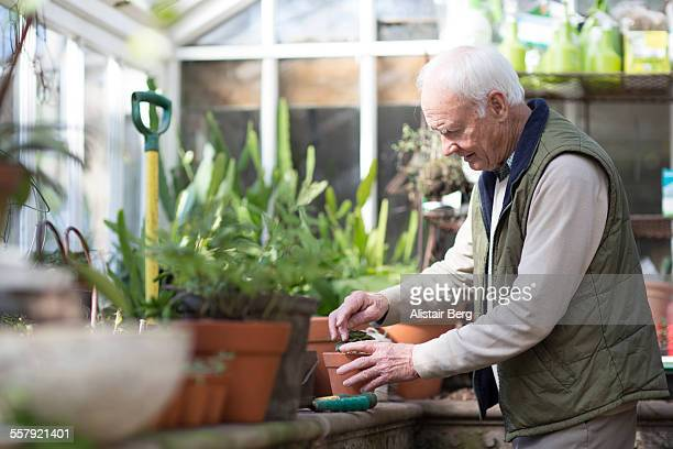 senior man working in a greenhouse - recreational pursuit stock pictures, royalty-free photos & images