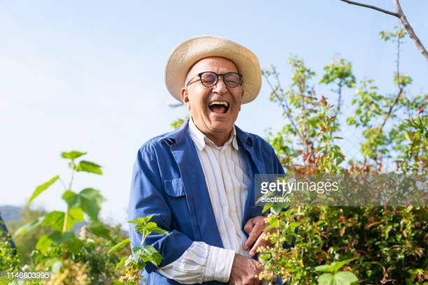 senior man working in his garden on a sunny day - greek culture stock pictures, royalty-free photos & images
