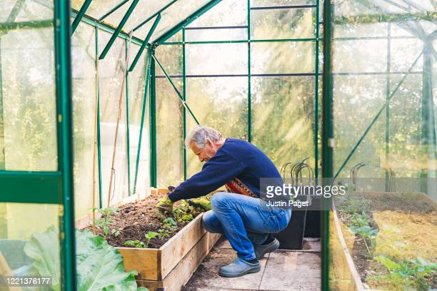 senior man working in his greenhouse - garden stock pictures, royalty-free photos & images