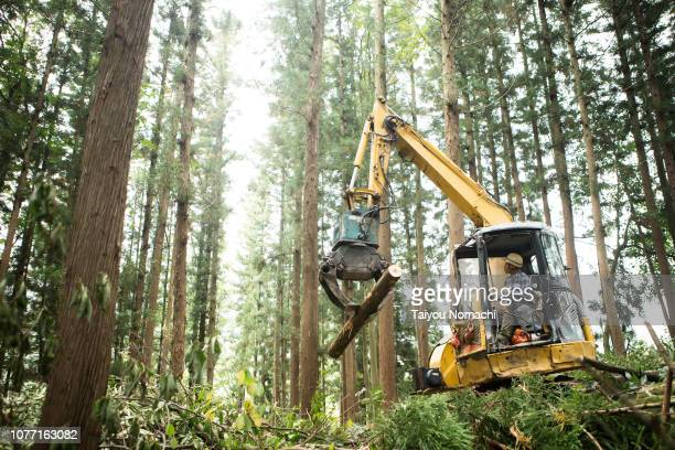 Senior men driving heavy machinery and moving timber