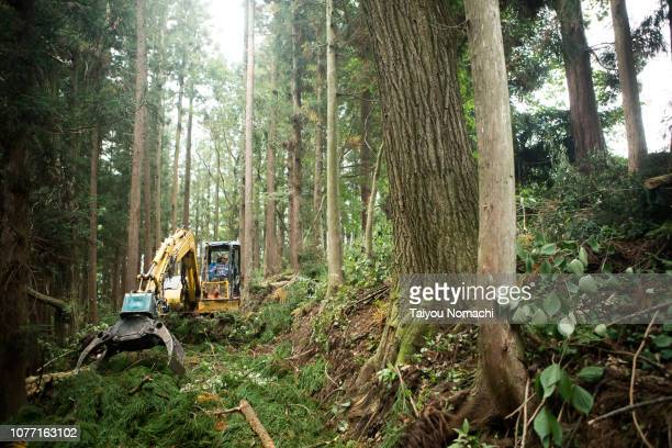 senior men driving heavy machinery and moving timber - deforestation stock pictures, royalty-free photos & images