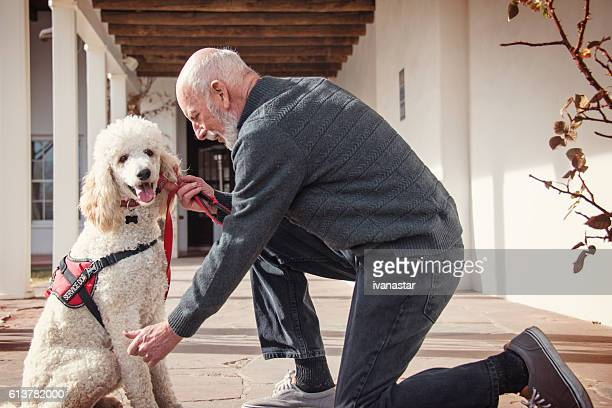 senior men with his service dog and a best friend - standard poodle stock photos and pictures
