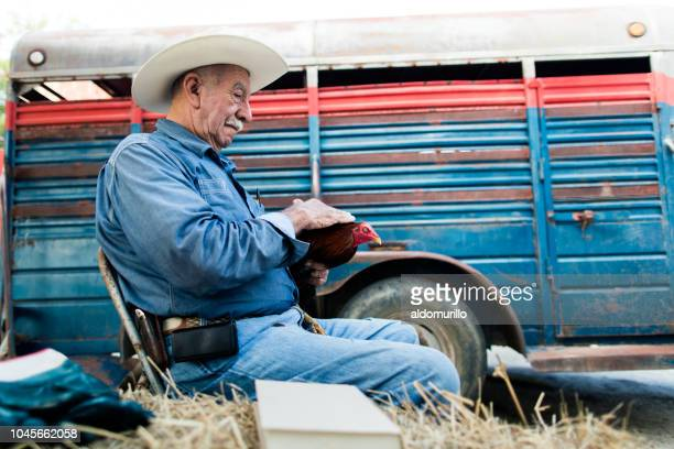 senior mexican man sitting on chair and holding rooster - female animal stock pictures, royalty-free photos & images