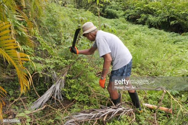 senior pacific islander country farmer cut the bush with machete - rafael ben ari fotografías e imágenes de stock