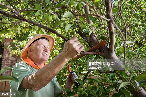 Senior Stutzen Tree