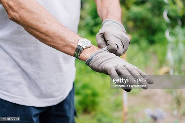 senior putting on garden gloves - glove stock pictures, royalty-free photos & images