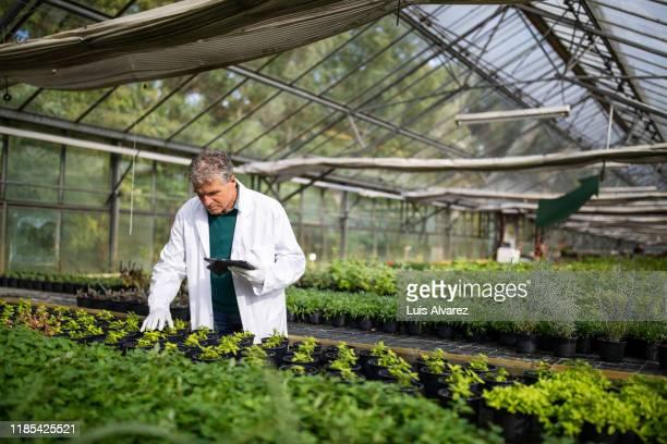 senior scientist supervise seedlings in garden center - biologo foto e immagini stock
