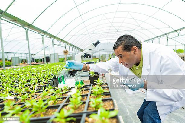 Senior scientst studies plant life in greenhouse