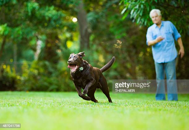 senior training his dog - stunt stock pictures, royalty-free photos & images