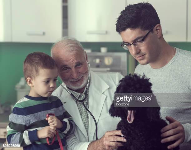 Senior Veterinarian Treating a Family Dog
