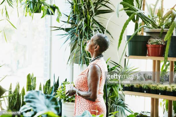 senior woman admiring plants while shopping in plant store - sleeveless stock pictures, royalty-free photos & images