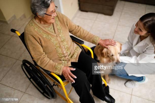 seniorin und betreuerin mit therapiehund zu hause - servicehund stock-fotos und bilder