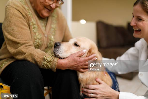 senior woman and caregiver with therapy dog at home - alternative therapy stock pictures, royalty-free photos & images