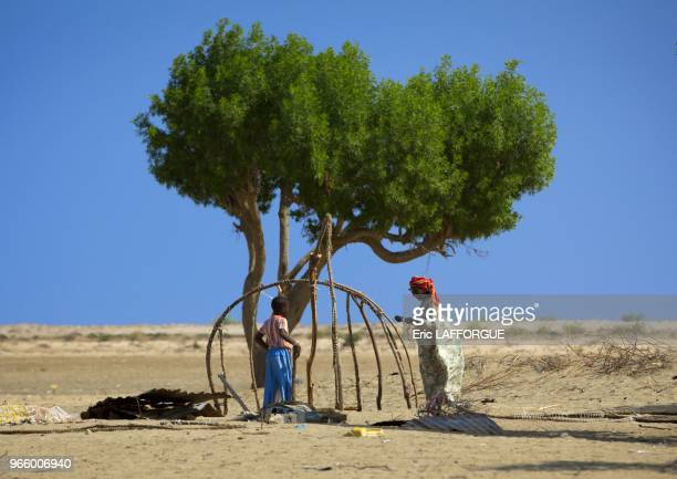 Senior Woman And Child Construct Aqal Soomaali Somali Hut Next To A Tree Near Zeila Somaliland