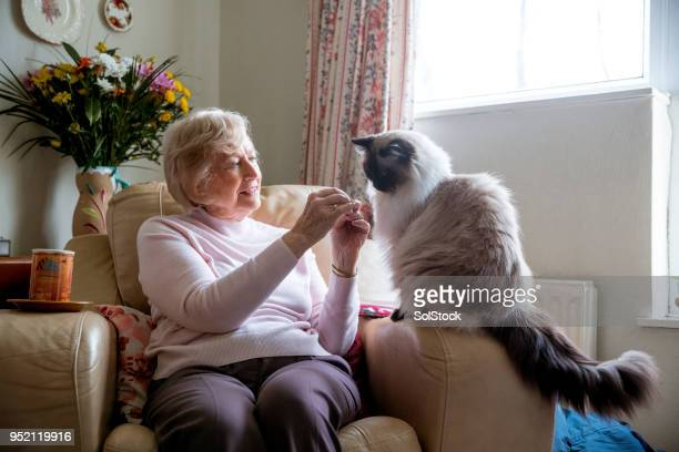 senior woman and her pet cat - pets stock pictures, royalty-free photos & images