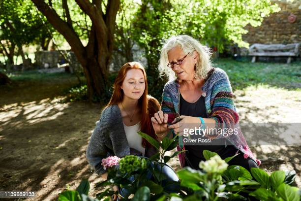 senior woman and young woman examining flower in garden - wisdom stock pictures, royalty-free photos & images