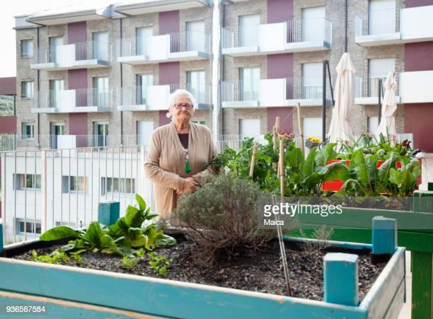 senior woman caring on the roof garden - urban garden stock photos and pictures