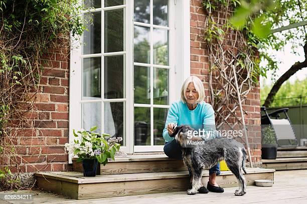 Senior woman combing dogs hair at house entrance