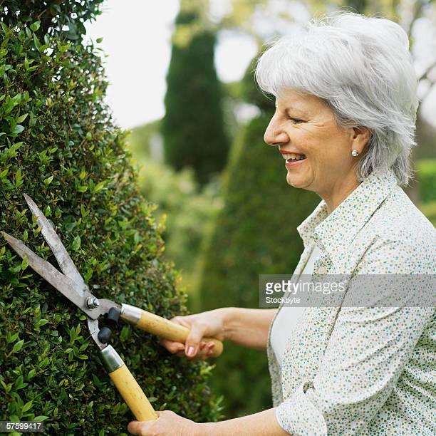 Senior woman cutting her hedge