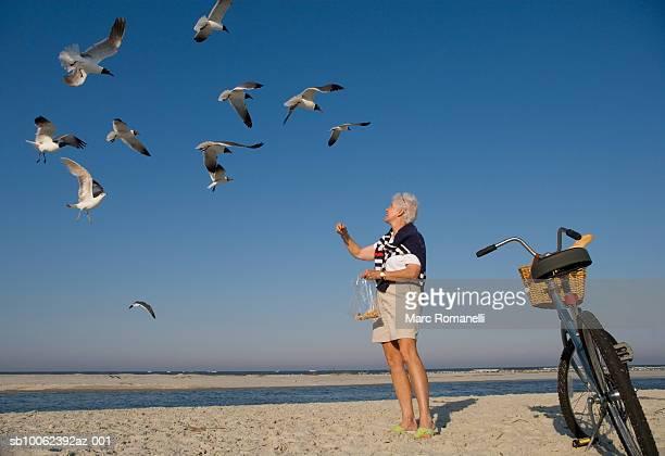 Senior woman feeding seagulls on beach, low angle view